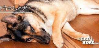 犬と赤ちゃんアレルギーの心配