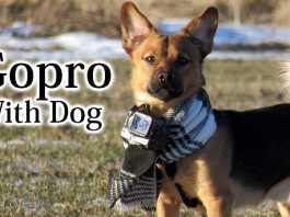 犬とゴープロ