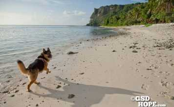 犬とグアム海外渡米の思い出