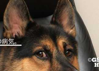 犬の外耳炎治し方や原因