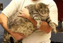 ペット肥満と健康被害