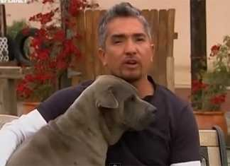 ダメ犬しつけ方と飼い主の訓練方法