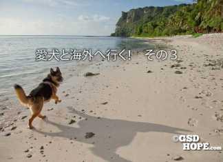 大型犬シェパードと海外旅行迷子防止ケージ裏技
