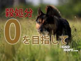 犬猫殺処分ゼロ2020年政府計画はどうなる