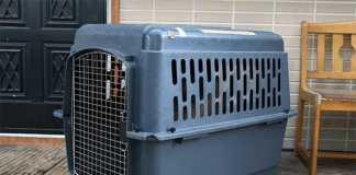大型犬用プラスチックケンネル