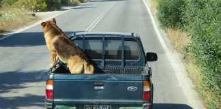 犬シートベルト