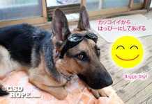 愛犬ハッピーカレンダーとは?