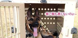 米警察犬訓練士から学んだ方法