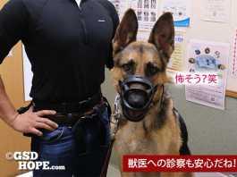 水が飲める!犬噛付き防止おすすめマズル(口輪)