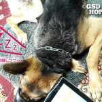 犬の心の癒やし&ゆったり時間