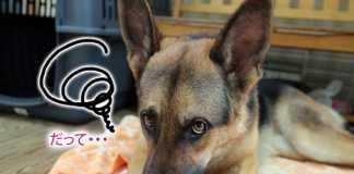 犬食糞の原因