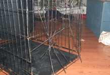 一般的な犬バリケンや犬ケージは壊れる