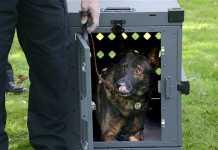 強く耐久性高い犬ゲージ