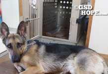 犬のハウス選び