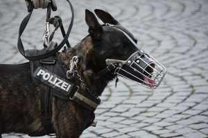 使い方別犬用リードの選び方