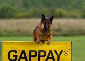 警察犬不足の問題
