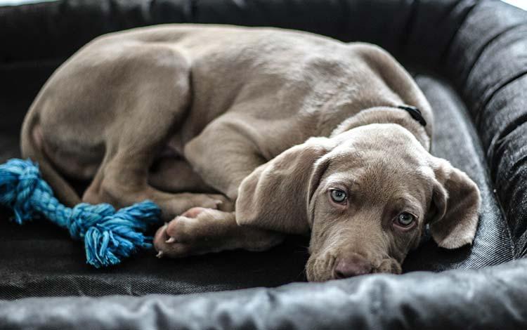 犬が下痢対処法