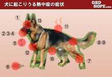 犬熱中症症状