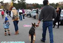 保護犬や大型犬シェパードは社交的になる?犬友注意点の理由