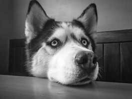 犬の視界や見え方と人間との違い