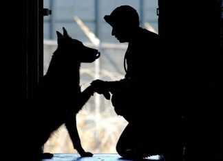 ペットが人の心と体の健康を改善してくれる6つの理由