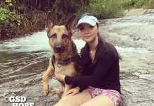 保護犬シェパードと久美