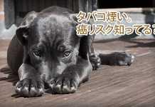 犬とタバコの害。受動喫煙・副流煙の影響力