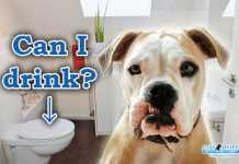 なぜ犬がトイレの水を飲むの?