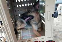 外犬やベランダ・バルコニー犬も熱中症対策