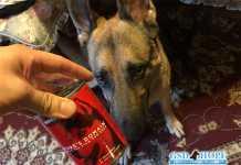 犬熱中症予防食:カークランドのターキー&ピーシチュー缶詰