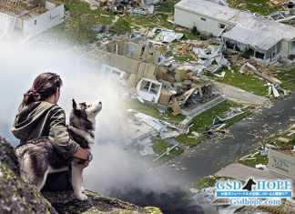 災害時のペット避難に備える7の必要な物、心構え