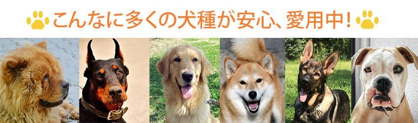 多くの犬種が大型犬 折りたたみクレート愛用中!