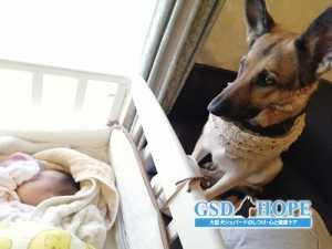 心構えをしっかり!愛犬と赤ちゃんとの接し方