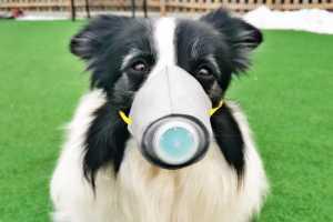 犬用マスクで新型コロナウイルス対策