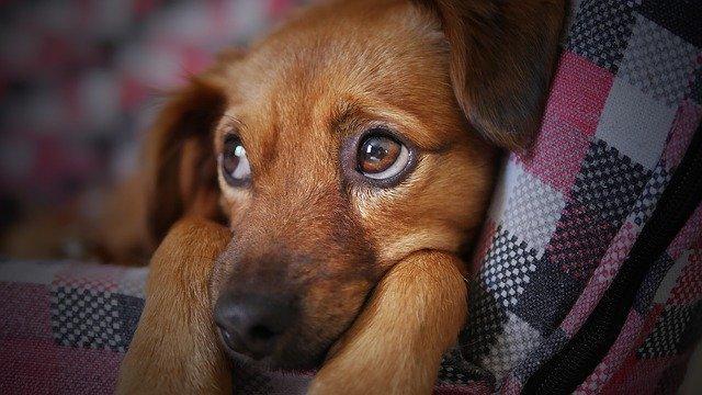 新型コロナウイルスの犬感染と対策