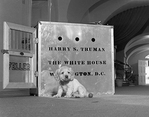ハリー・S・トルーマン大統領と犬